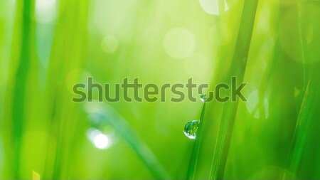 Foto stock: Caída · hierba · verde · naturales · bokeh · suave