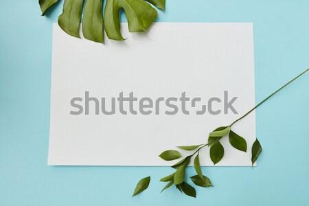 carte postale d cor vertical cadre bleu feuilles vertes photo stock iaroslav. Black Bedroom Furniture Sets. Home Design Ideas