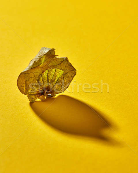 Dry shell Physalis fruit on a yellow background, soft focus with soft shadow. Stock photo © artjazz