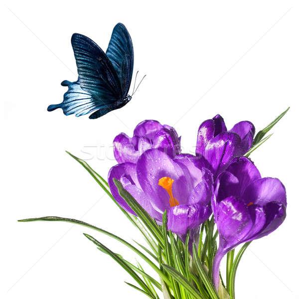 çiğdem buket kelebek yalıtılmış beyaz çiçek Stok fotoğraf © artjazz