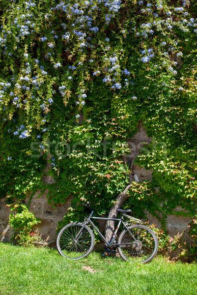 Greenery in Palma de Mallorca Stock photo © artjazz