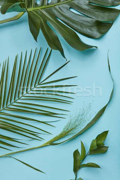 Feuilles vertes isolé bleu décoration design affiche Photo stock © artjazz