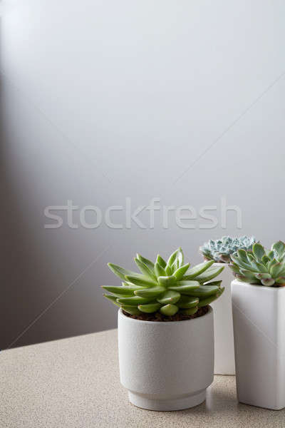 Small plant in white pot on stone table against neutral wall background Stock photo © artjazz