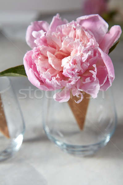 Delicate pink peony flower in a wafer cone in a glass standing o Stock photo © artjazz