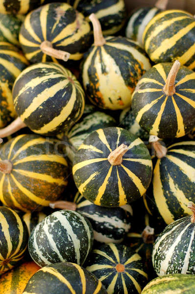 background from small pumpkins Stock photo © artjazz