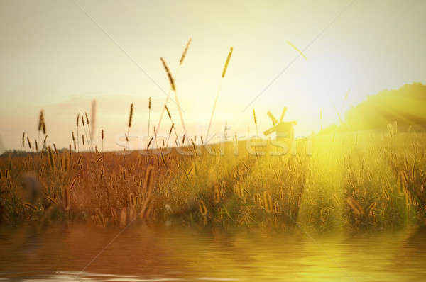 field on sunset with water reflection Stock photo © artjazz