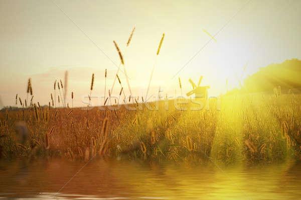 Domaine coucher du soleil eau réflexion ciel arbre Photo stock © artjazz