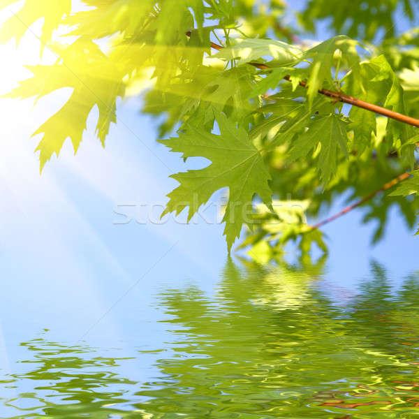 Zielone wiosną pozostawia Błękitne niebo drzewo słońce Zdjęcia stock © artjazz