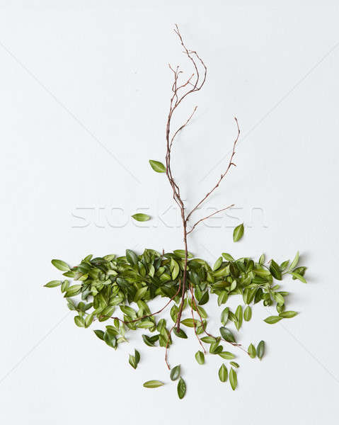 Branch with fallen leaves Stock photo © artjazz