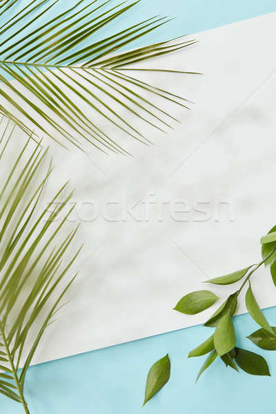 Palm green leaves covering blank copy space Stock photo © artjazz