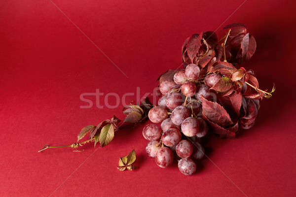 bunch of ripe red grapes Stock photo © artjazz