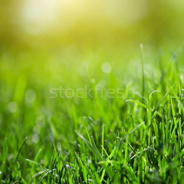 green grass background with sun beam Stock photo © artjazz