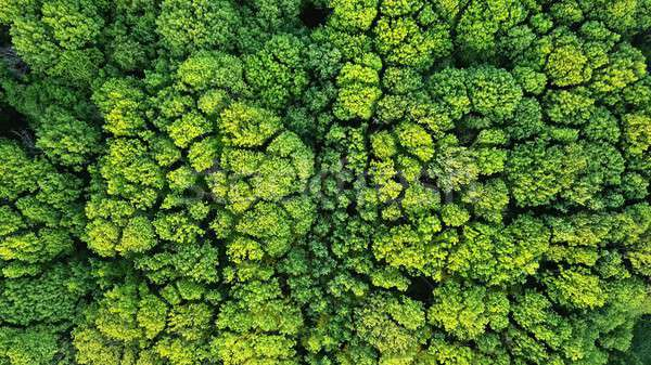 Aerial viev green forest on a spring day, natural background. Photo from the drone Stock photo © artjazz