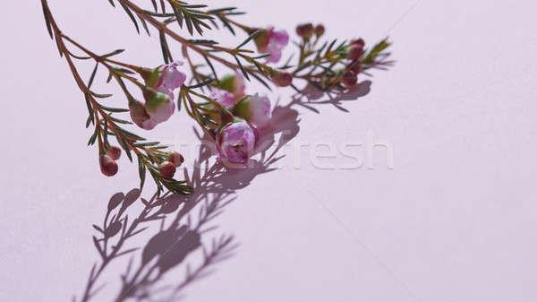 Zdjęcia stock: Wiosną · różowy · kwiaty · czasu · oddziału