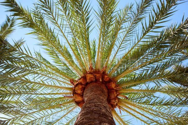Cocotier arbres palmiers soleil ciel clair arbre Photo stock © artjazz