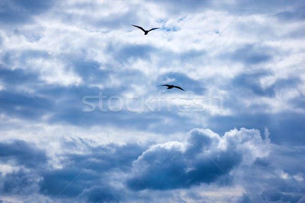 Stock fotó: Felhők · kék · ég · napfény · sötét · kettő · repülés