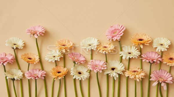 Spring composition of fresh gerberas on a yellow paper background. Stock photo © artjazz