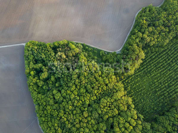 Aerial photo from flying drone of a land with young trees and a plowed field Stock photo © artjazz