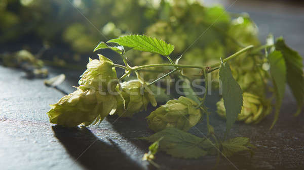 Stock photo: Hop cones with leaves