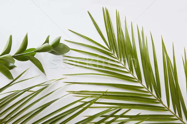 Feuilles vertes frontière espace de copie texte blanche lumière Photo stock © artjazz