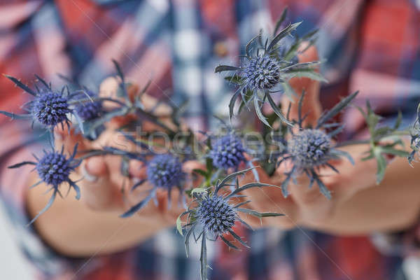 женщины рук синий цветок свежие синий цветы Сток-фото © artjazz