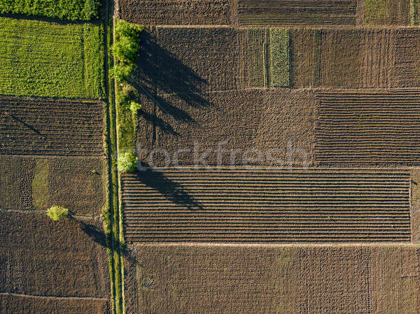 aerial photo of agro, summer view of green land with fields and gardens. Stock photo © artjazz