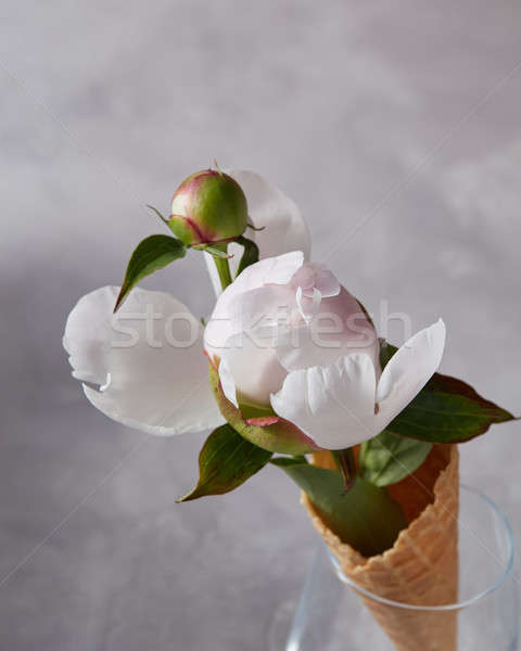Buds gently pink peony in a waffle cone in a glass on a gray concrete background with copy space. To Stock photo © artjazz