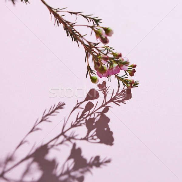 цветения филиала розовый цветы весны отражение Сток-фото © artjazz