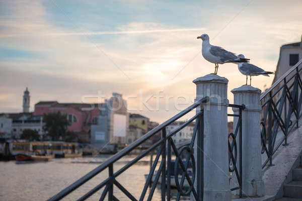 Seagull on the top of the stone stairs Stock photo © artjazz