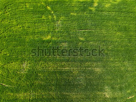 Agriculture field aerial photo of a rapeseed green field Stock photo © artjazz