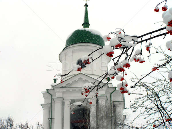 Brunches of ashberry in snow against the church Stock photo © artjazz