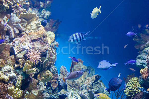 Sok hal korallzátony gyönyörű akvárium természet Stock fotó © artjazz