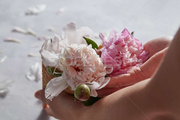 Stock photo: Hands of a woman holding a bouquet of pink peony in a waffle con