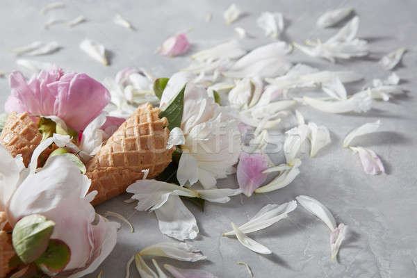 Summer flowers - fresh gentle pink and white peony in a wafer co Stock photo © artjazz