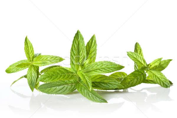 Yeşil nane yalıtılmış beyaz bahar gıda Stok fotoğraf © artjazz