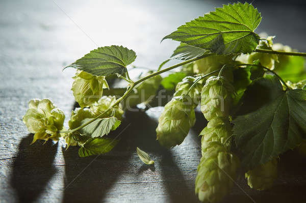 Hop cones and leaves. Fresh green background Stock photo © artjazz