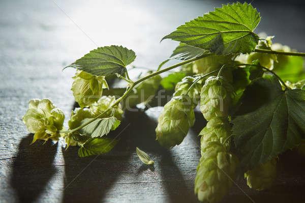 Hop bladeren vers groene rijp bush Stockfoto © artjazz