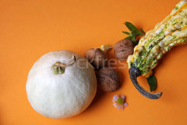 Autumn composition of pumpkins Stock photo © artjazz