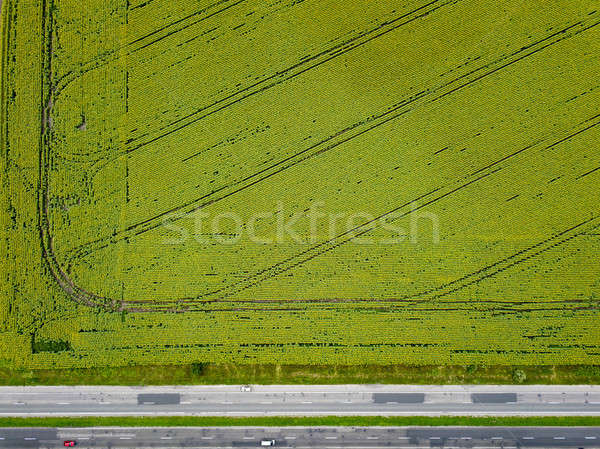 Aerial view from a drone on an agricultural field with a rural road along the field and cars on it.  Stock photo © artjazz