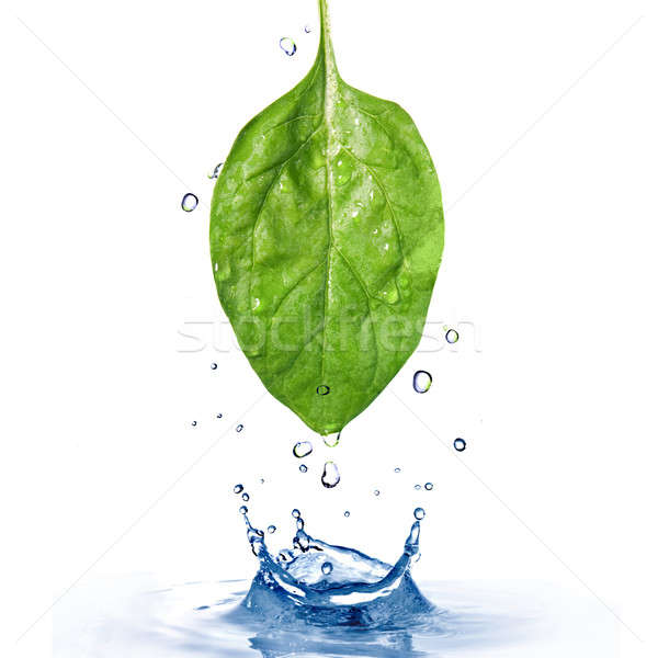 Groene spinazie blad waterdruppels splash geïsoleerd Stockfoto © artjazz