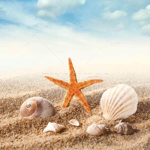 Sea shells on the sand against blue sky Stock photo © artjazz