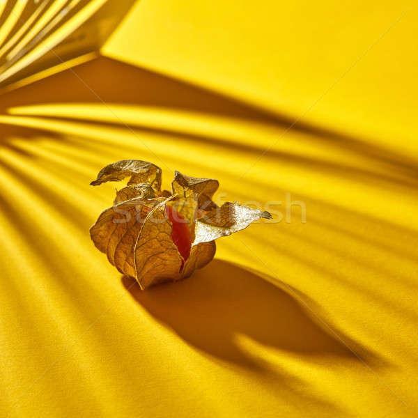 Görmek sarı olgun sulu meyve Stok fotoğraf © artjazz