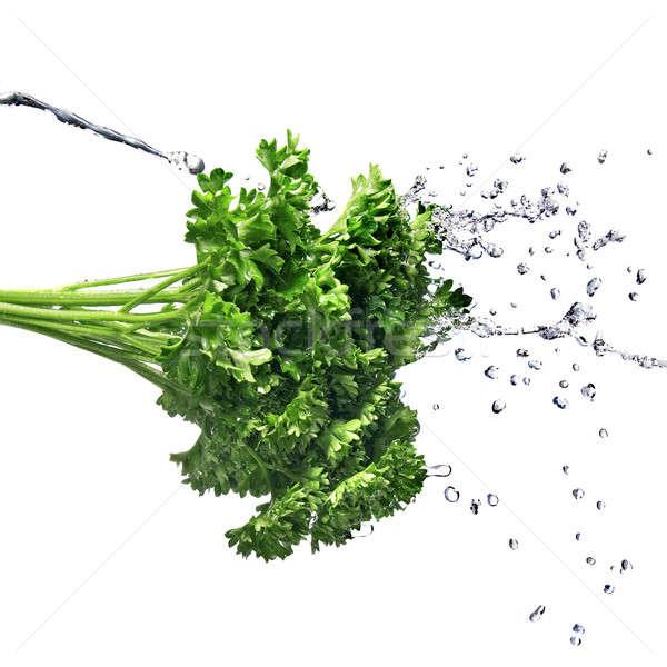 Сток-фото: капли · воды · зеленый · петрушка · изолированный · капли