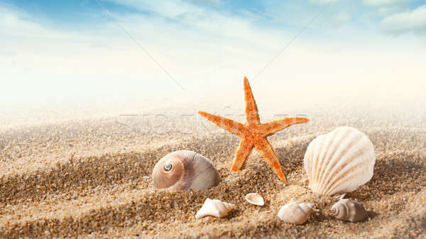 Sea shells on the sand Stock photo © artjazz