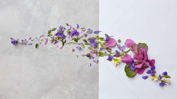 Stock photo: frame from flowers and leaves