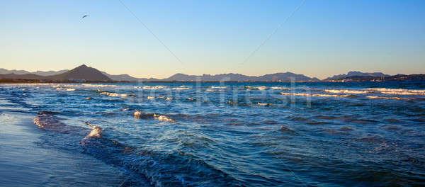 aves on the seashore Stock photo © artjazz