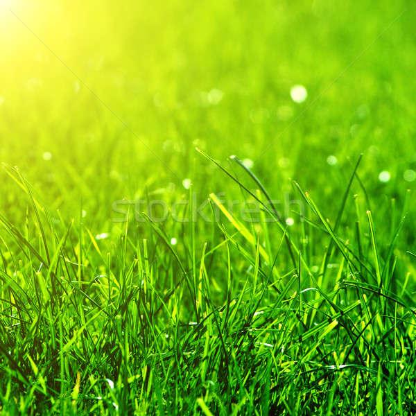 Zöld fű nap nyaláb absztrakt művészet nyár Stock fotó © artjazz