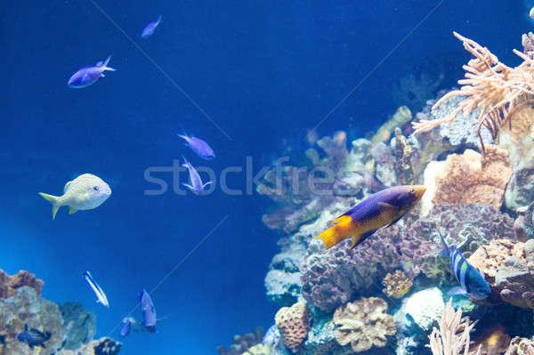 Sok hal korallzátony színes természet tenger Stock fotó © artjazz