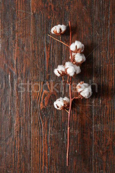 Branche blanche coton fleurs vieux bois photo - Branche de coton ...