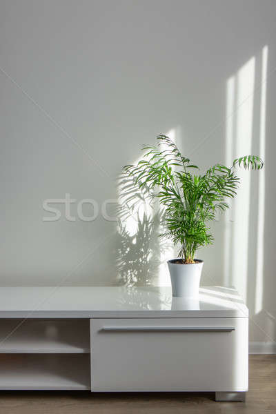 bright living room with houseplants Areca in a white pot on a table Stock photo © artjazz
